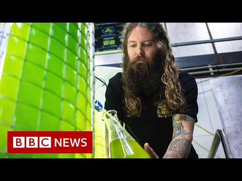 Australian craft brewery uses algae to fight climate change - BBC News