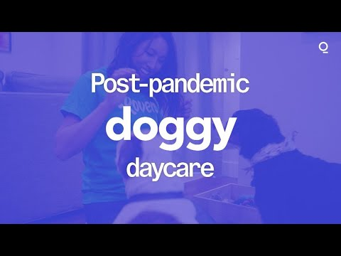 Post-Pandemic Doggy Daycare
