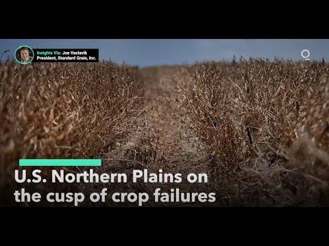 Drought-stricken Farmers Face Crop Failures