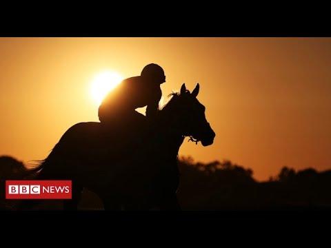 BBC News - Inside the abattoir slaughtering racehorses